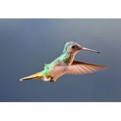 Small Crop Of Do Hummingbirds Sleep