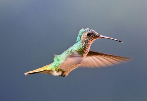 Medium Of Do Hummingbirds Sleep