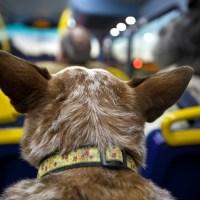 Ważne zmiany dla właścicieli psów w ZTM Warszawa już od 1 sierpnia!