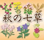 秋の七草の覚え方は語呂合わせ・歌♪ですぐ暗唱できる!!さらに花言葉でレベルアップ!