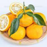 ゆずの効能は栄養がどっさり!!風邪予防肌の保湿は精油のアロマでお風呂❣