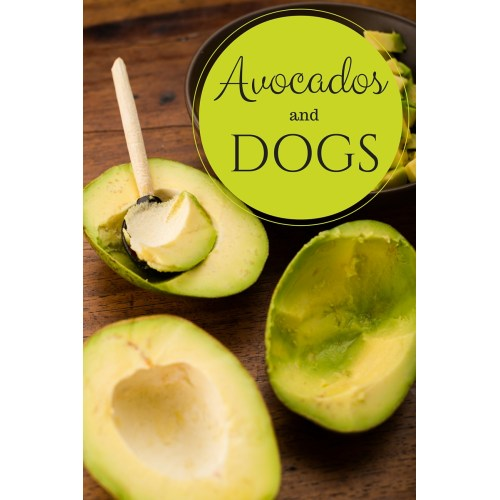 Medium Crop Of Avocado And Dogs
