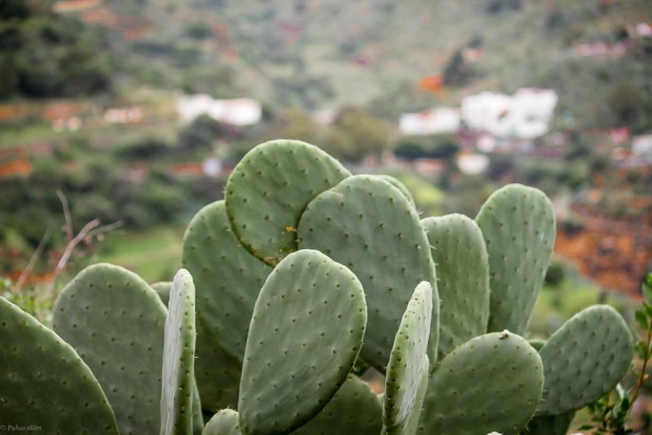 Cran Canaria-67