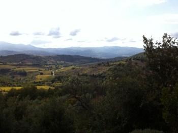 Benziger-Winery-Sonoma