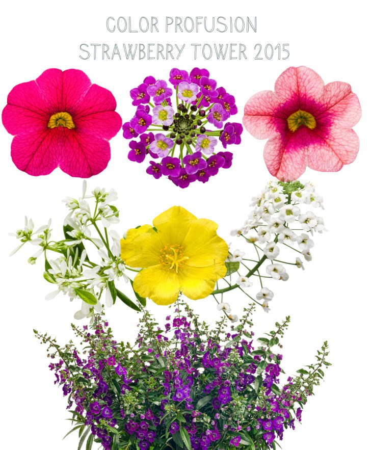 color profusion planting plan for the www.pithandvigor.com strawberry tower
