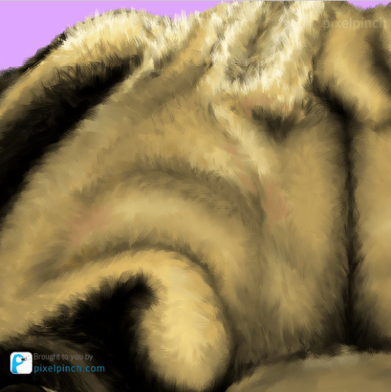 Head Hair Highlight Details Digital Art Dog Pug PixelPinch Digital Coloring Tutorial using Corel Painter & Tablet