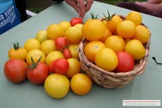 frische Tomaten für Pizzasoße