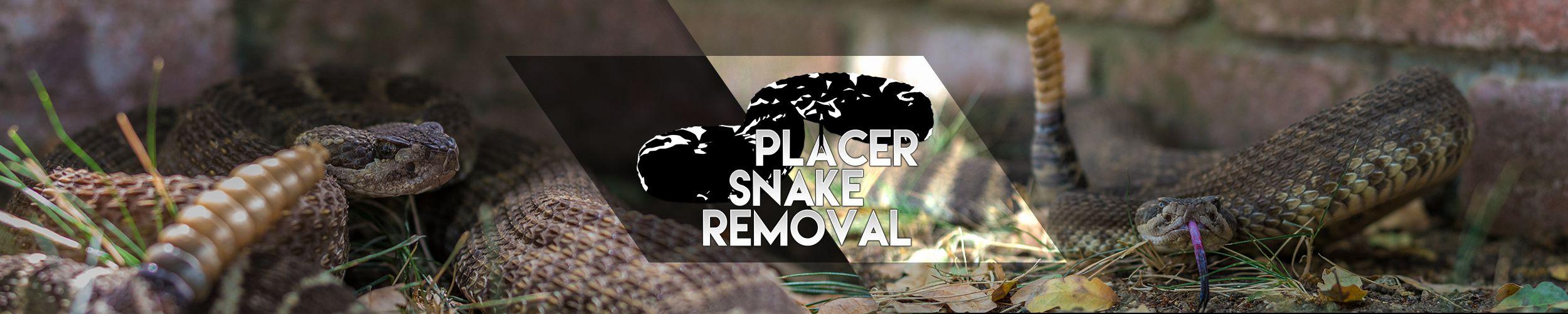 Placer Snake Removal Banner v3
