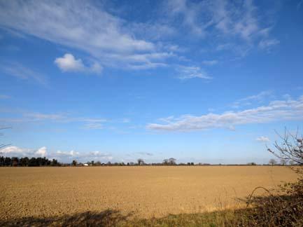 Norfolk Field - Spring
