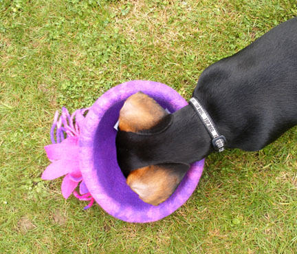 Mini Dachsie & winning ticket