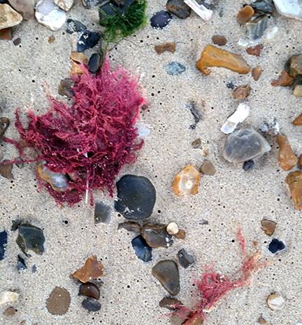 seaweed on the autumn beach