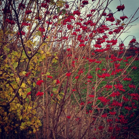 December berries