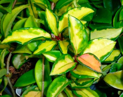 plantas-interior-menos-cuidados-4