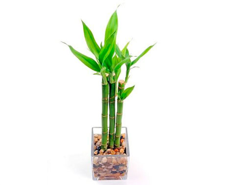plantas-interior-menos-cuidados-7