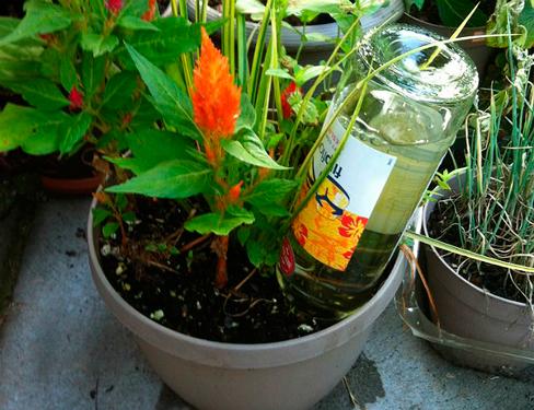 plantas-que-se-riegan-solas-1
