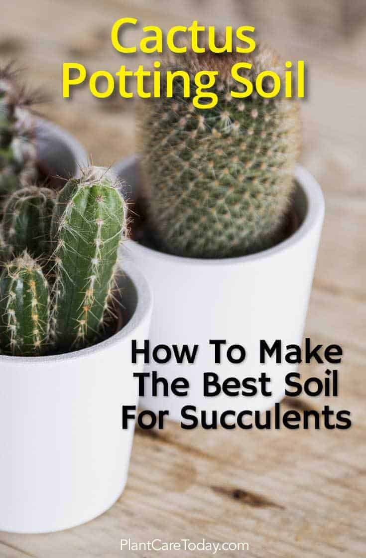 Special Cactus Potting How To Make Soil Bromeliads Succulents Orchid Potting Mix Reviews Orchid Potting Mix houzz-02 Orchid Potting Mix