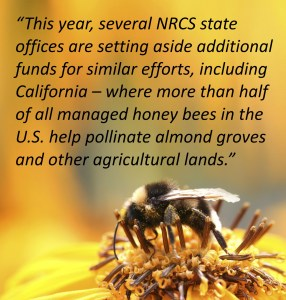Pollinator Pull Quote