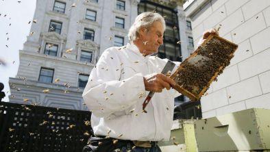 A beekeeper checks a hive at San Francisco's Fairmont Hotel.