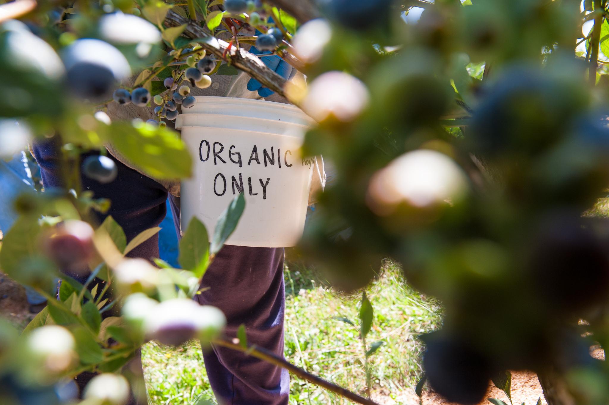 Nothing beats bug patrol for organic gardeners