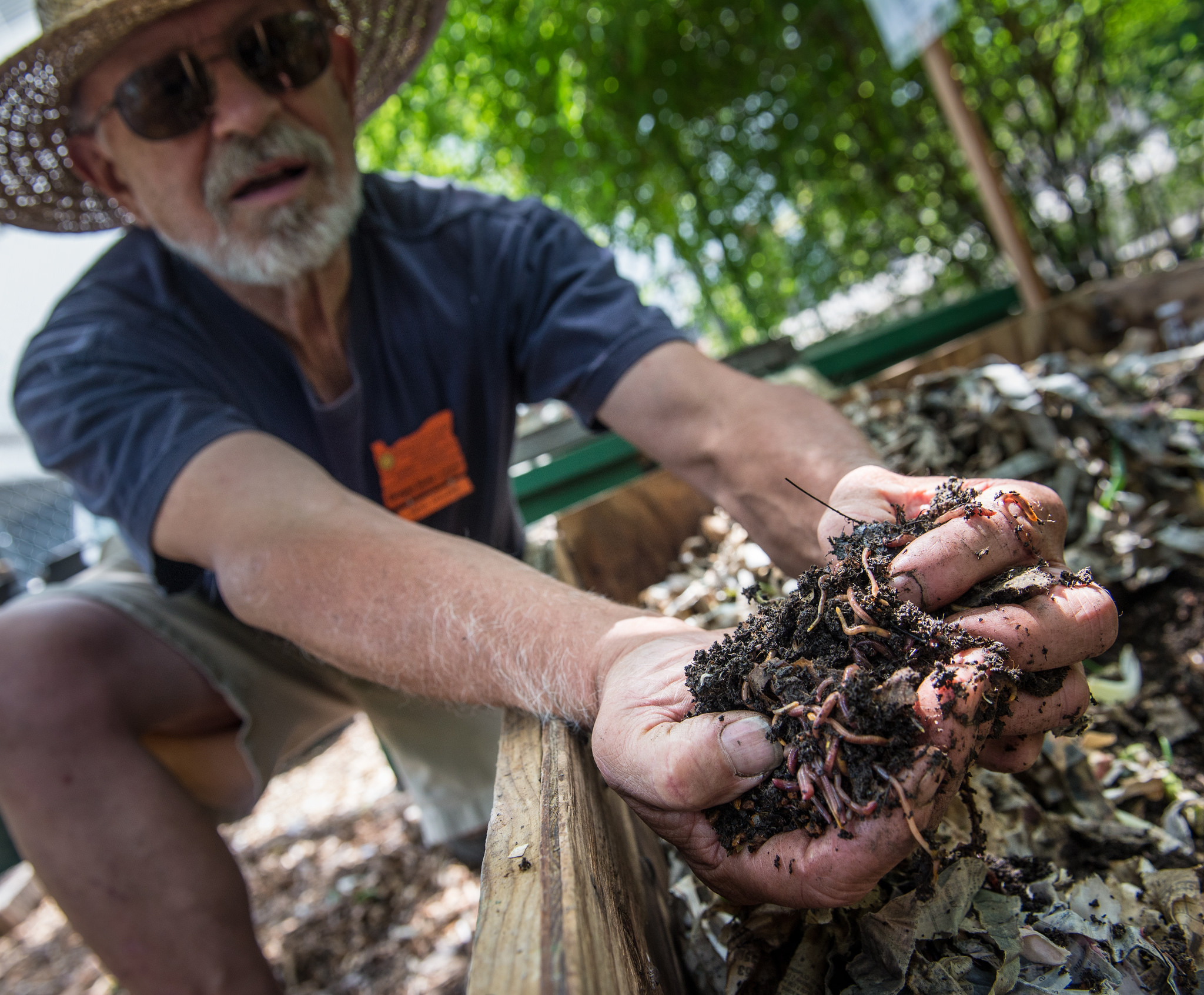 Red worms turn kitchen waste to gold