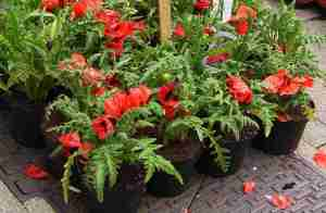 plant pot featured