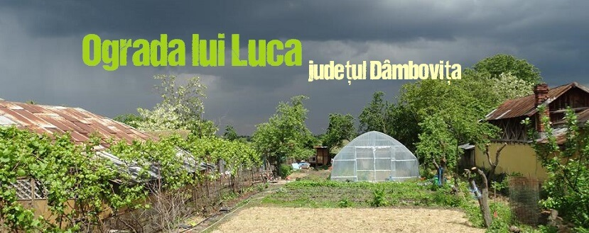 Ograda lui Luca, legume și fructe pentru copiii sportivi