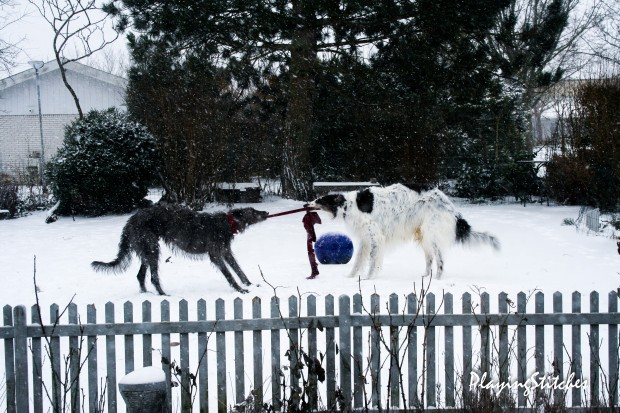 [:en]snow in my garden March hounds russian borzoi