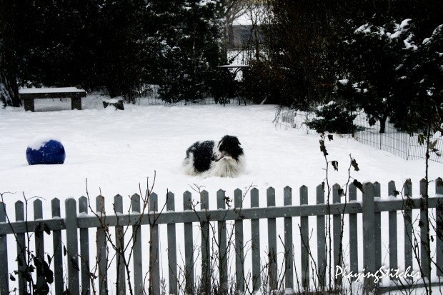 [:en]snow russian borzoi [:ru] борзая в снегу