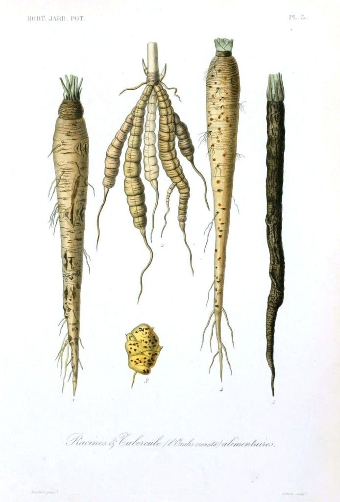 4 Ways to Make Winter Root Vegetables More Exciting
