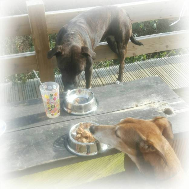 A dogs tea party with Harringtons: Win your very own party pack for your dog