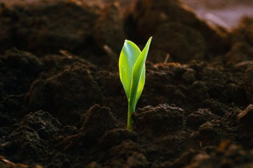 родючість ґрунту