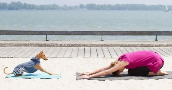 animals-yoga15