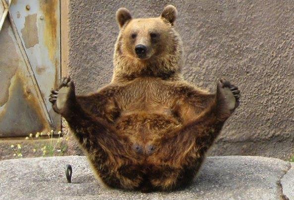 animals-yoga2