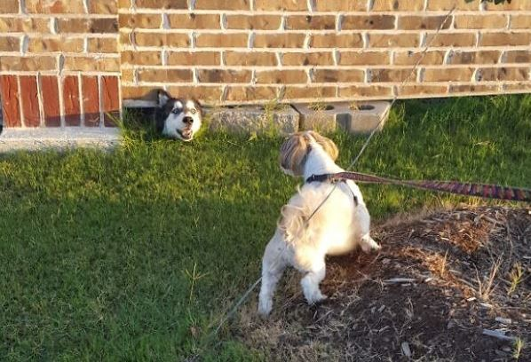 funny-dogs-9