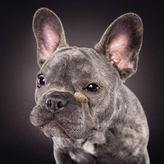 dogs-catching-treats-fotos-frei-schnauze-christian-vieler-39-57e8d0d867096__880