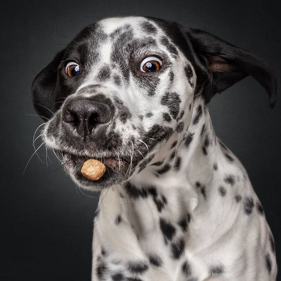 dogs-catching-treats-fotos-frei-schnauze-christian-vieler-58-57e8d0fed5d8b__880