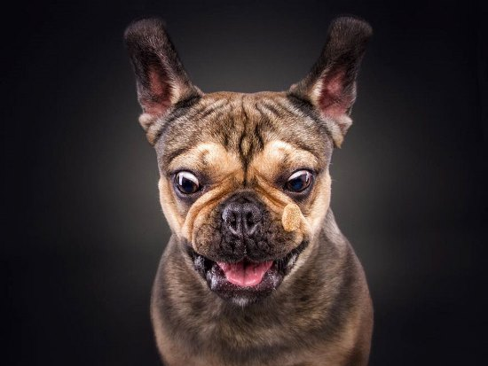 dogs-catching-treats-fotos-frei-schnauze-christian-vieler-69-57e8da718d248__880