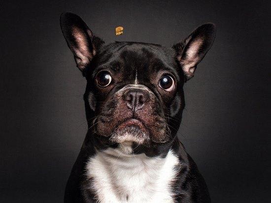 dogs-catching-treats-fotos-frei-schnauze-christian-vieler-8-57e8d09878be3__880
