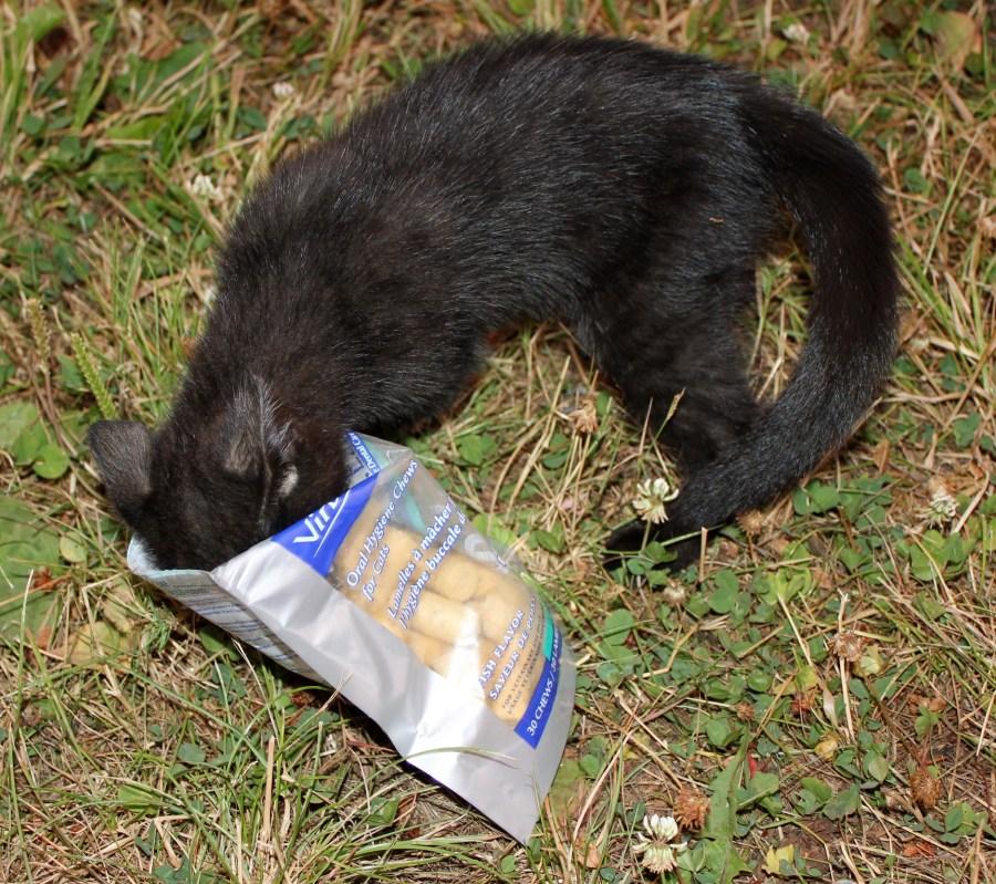 Ebenezer loves his CET cat chews!
