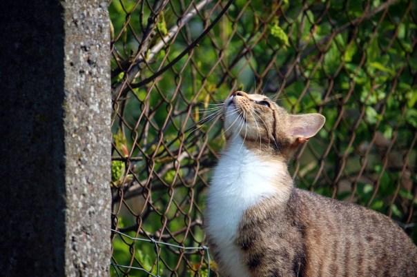 cat-1366167_1280