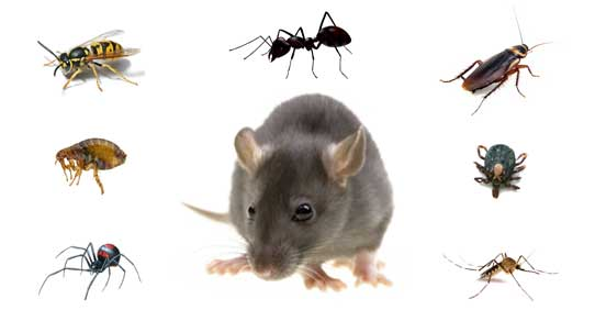 Pest Control 04