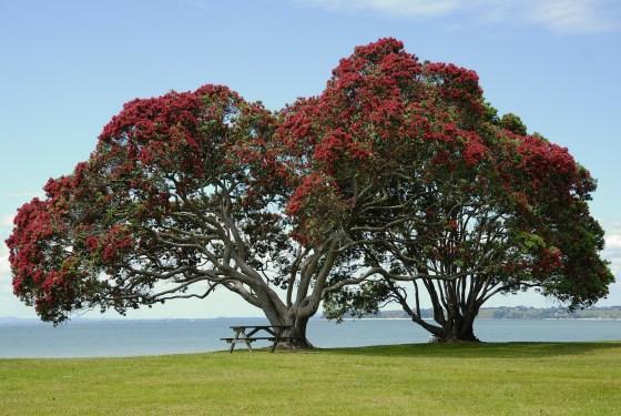 tree-141884_1920