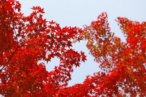 autumn-1840222_1920