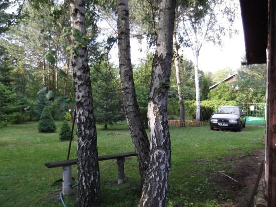 Drzewa na mojej działce2