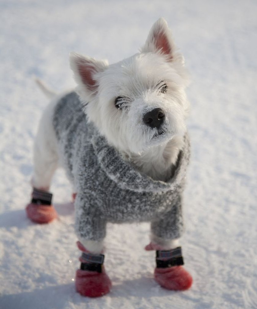 cute little dog dressed up in snow gear