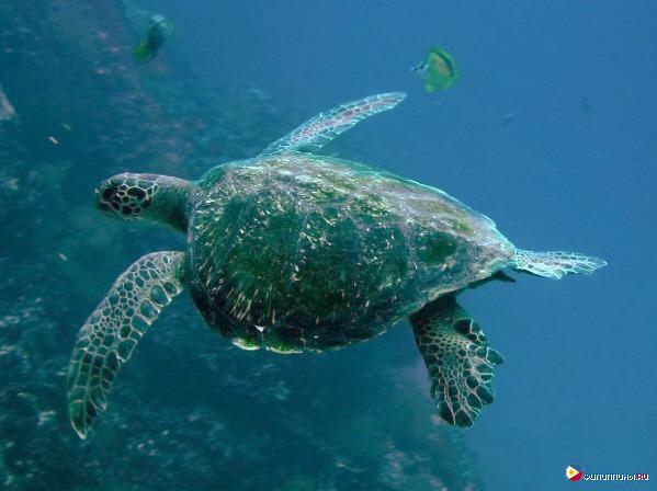 http://i1.wp.com/polina.harbertstudio.com/wp-content/uploads/2014/12/green_turtle.jpg