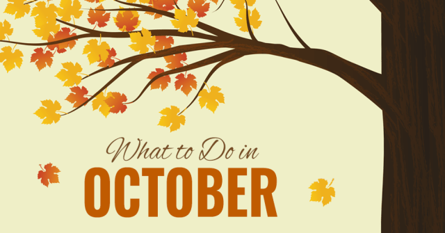 what to do in fort wayne october 2015