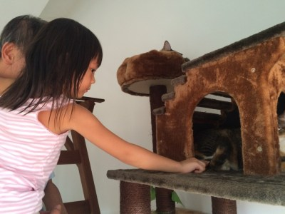 Kids having fun with the cats