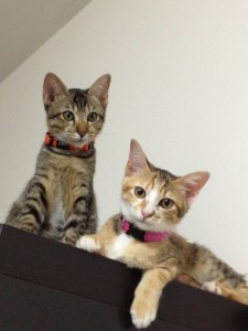 Kittens at The Muses up for adoption!