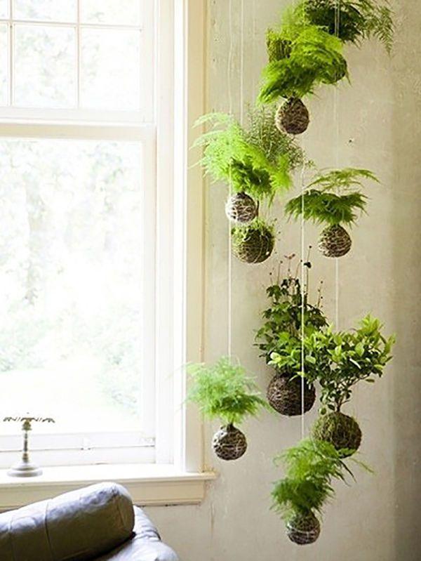 como decorar con plantas